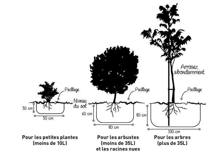 Plantation et entretien