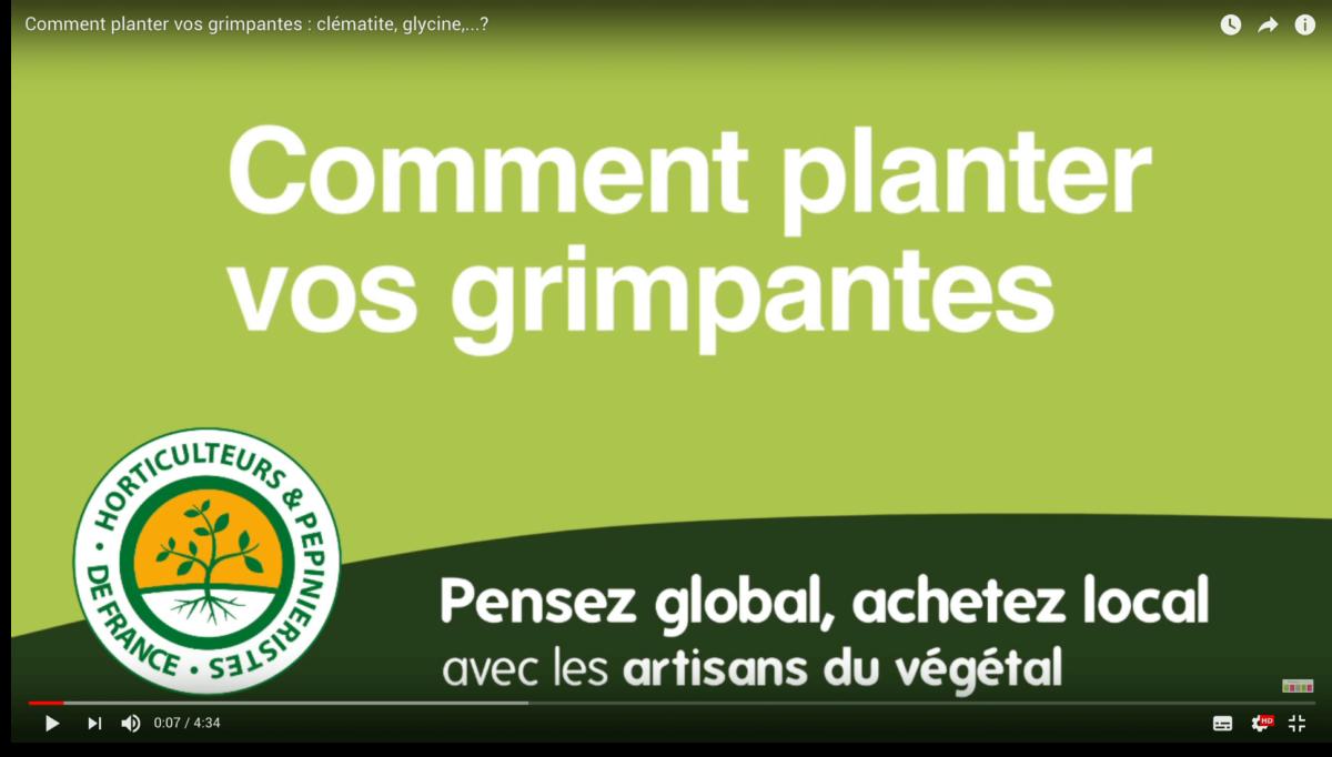 Vidéo plantation plantes grimpantes : choix, plantation et taille