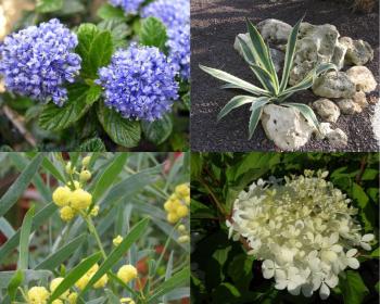 Aménager votre jardin en bord de mer : toute la gamme