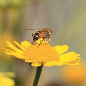 Des idées pour aménager votre jardin mellifère