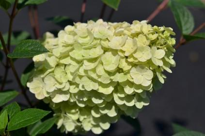 Aménager un jardin d'ombre avec des plantes fleuries