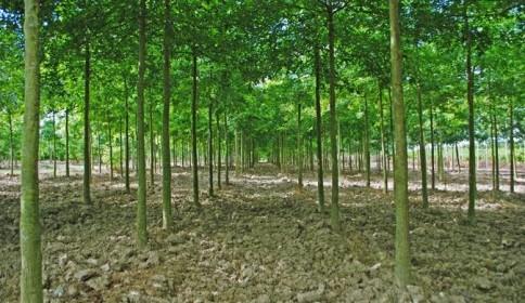 Chantier de paysage : opter pour des arbres tige