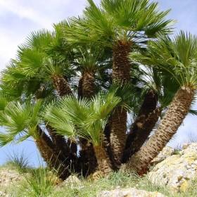 Aménager votre jardin en bord de mer : les arbres