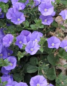 Aménager un jardin de climat doux avec des arbustes fleuris