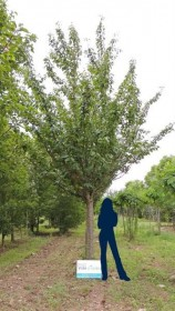 Les autres formes d'arbres d'alignement