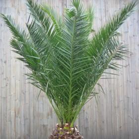 Aménager un jardin de climat doux avec des plantes exotiques