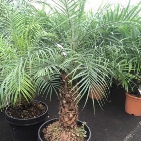 Les plantes d'intérieur pour votre patio
