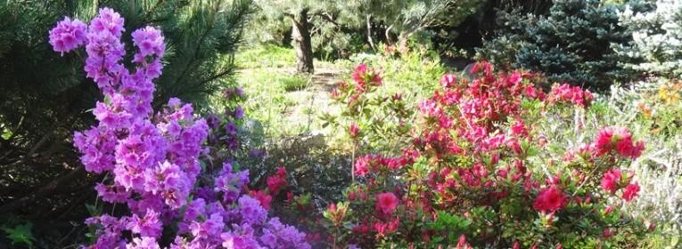 Toute la gamme des plantes de terre de bruyère