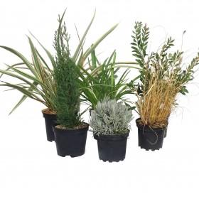 Toutes les plantes méditerranéennes et exotiques