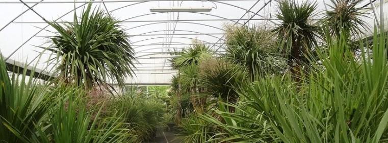 Les autres plantes méditerranéennes et exotiques