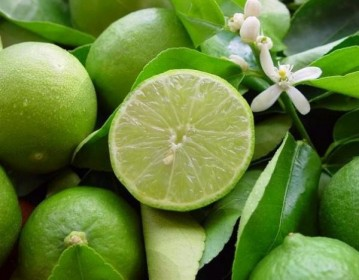Les arbres fruitiers : les agrumes