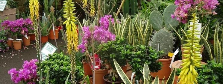 Des plantes pour votre intérieur